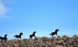 Washington State Wild Horse Monument