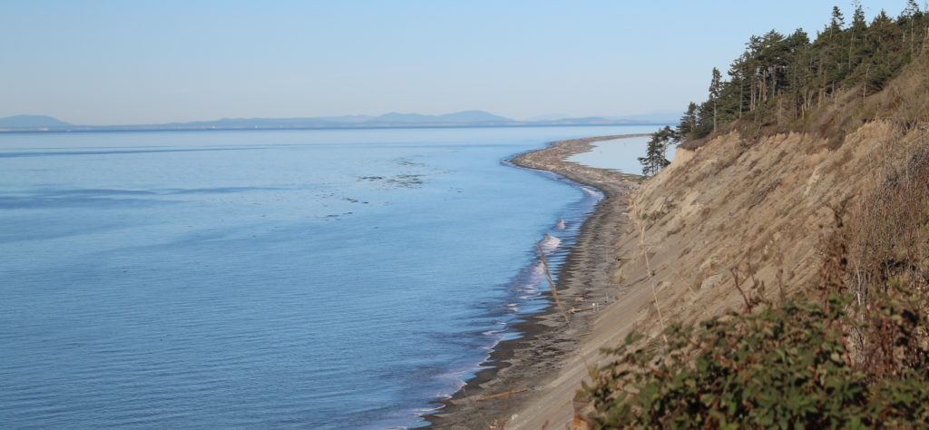 view of the Dungeness Spit from down the bluff
