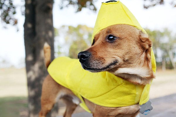 Raincoats for dogs when hiking in the rain
