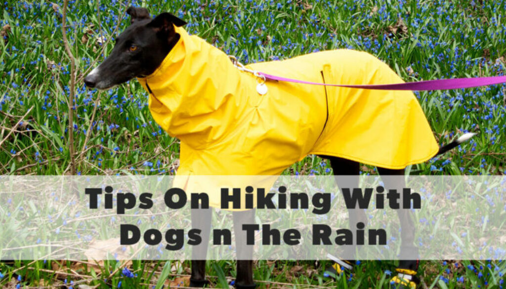 tips for hiking with your dog in the rain